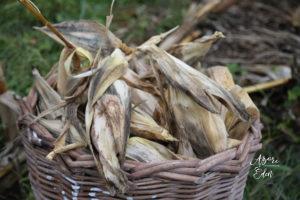 Kukoricatörtés az Azori-szigeteken 1