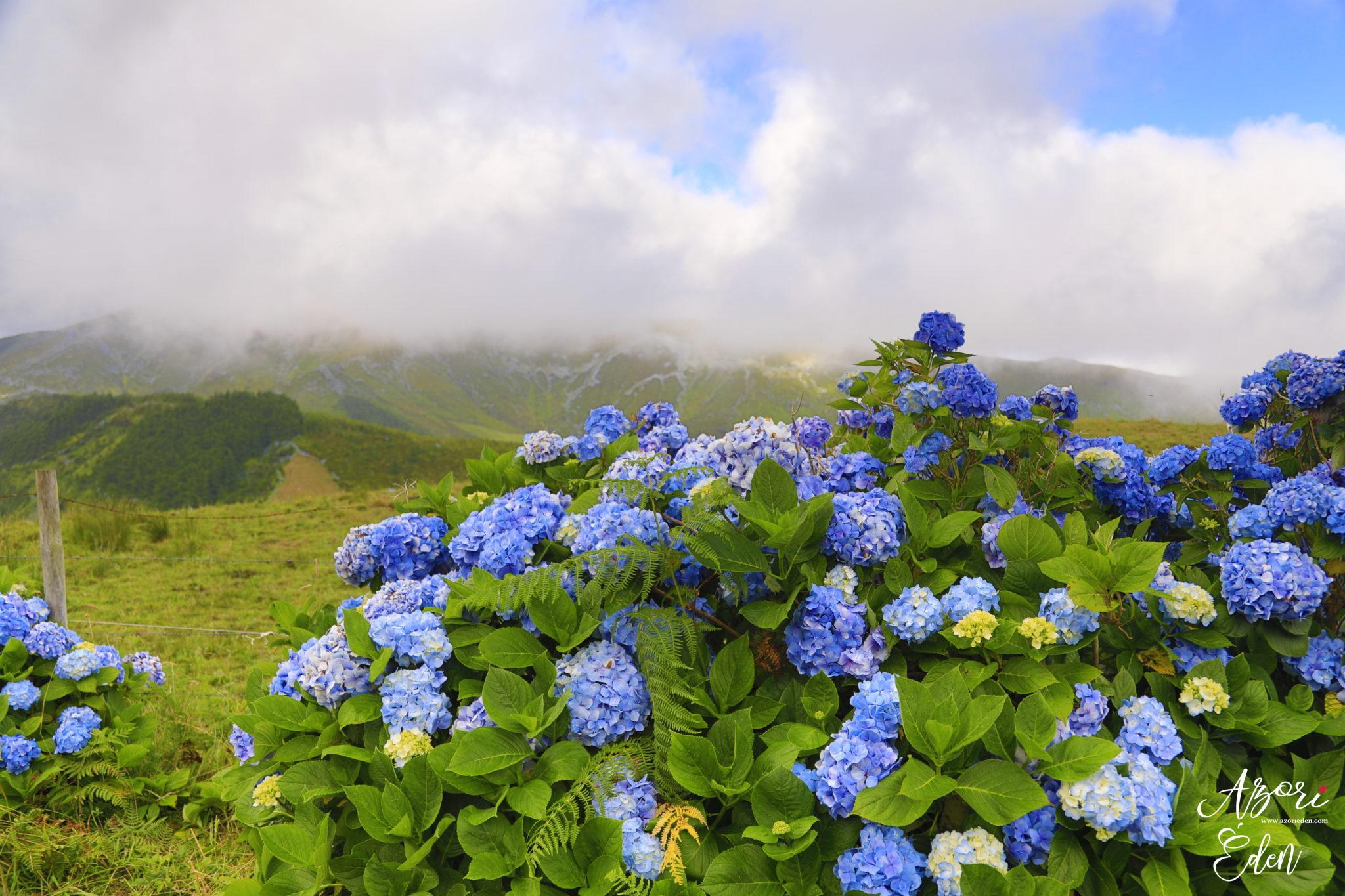 Ez fogadja az Azori-szigetekre érkezőket